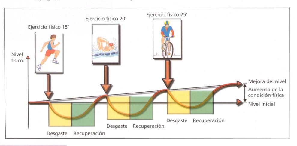 Fundamentos anatómicos y bases del acondicionamiento físico ...