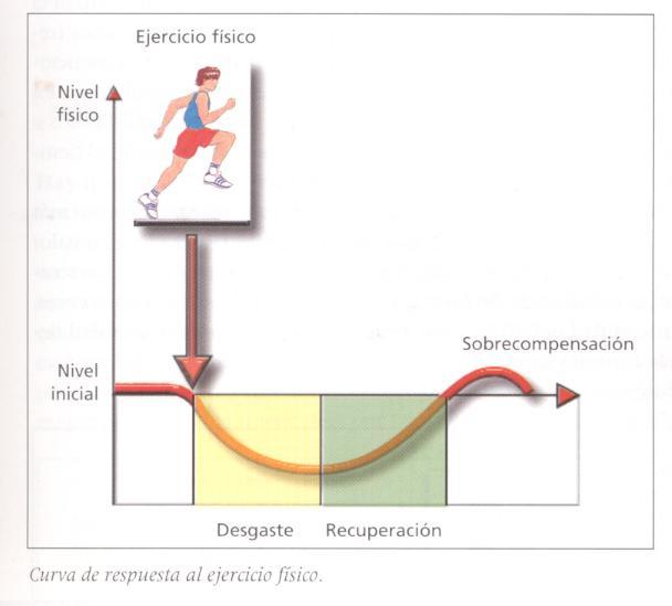 Principio de la continuidad del proceso de entrenamiento